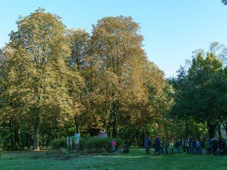 Im Volkspark (I)